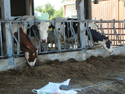 Studying Feed and Feeding