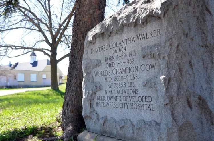 gravestone cow